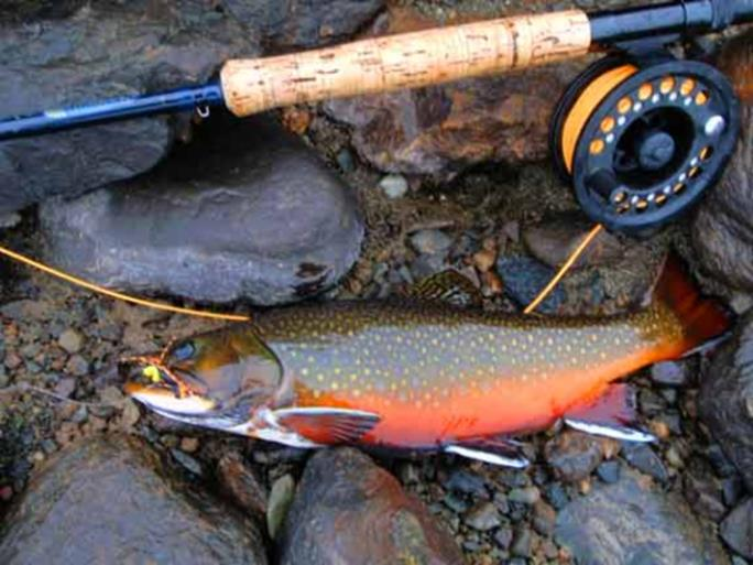 Fly Fishing And Casting School Nh Outdoor Learning Center
