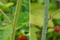 edible-plants