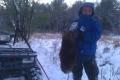 furbearer-trapping3